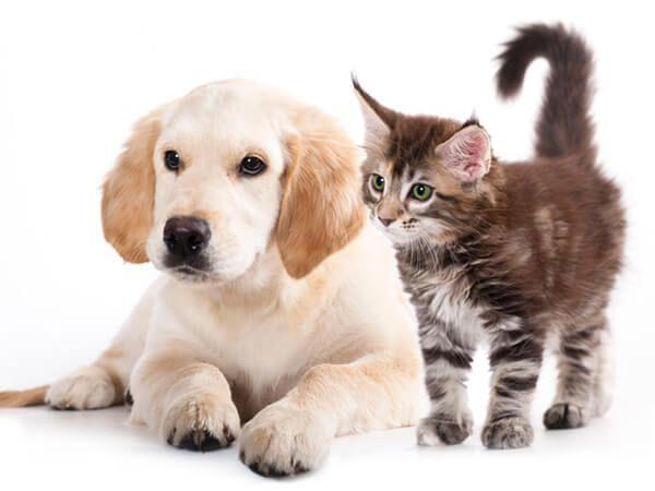Haustier Ergänzungen